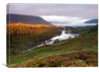 Dawn in Glen Affric, Canvas Print