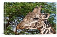 Giraffe Headshot, Canvas Print