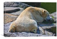Sleepy Polar Bear, Canvas Print