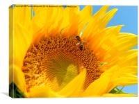 The Bee and the Sunflower, Canvas Print