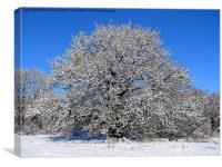 Oak Tree in the Snow, Canvas Print