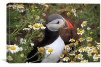 Puffin amongst the flowers, Canvas Print