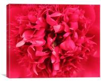 Petals , Canvas Print