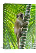 Green Monkey, Canvas Print