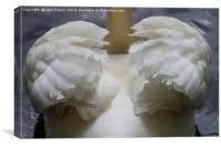 Wings of a Swan, Canvas Print