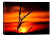 Sunset #1, Canvas Print