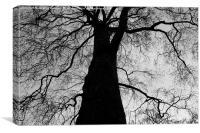 The Black Tree, Canvas Print