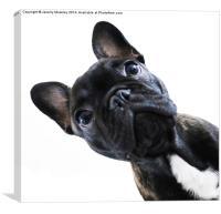 French Bulldog, Canvas Print