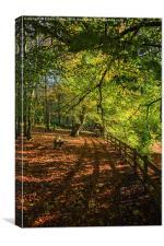 Autumnal Path, Canvas Print