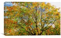 Autumn canopy, Canvas Print