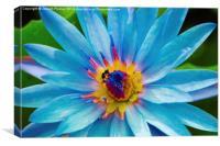 Blue Lotus, Canvas Print