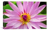 Pink Lotus, Canvas Print
