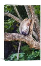 Thoughtful Macaque, Canvas Print