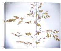 Grass, Canvas Print