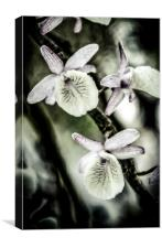 Surreal Orchid  , Canvas Print
