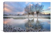 3 willows in Dedham mist, Canvas Print