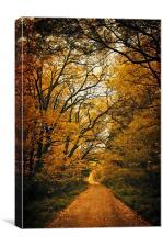 Fall coming, Canvas Print