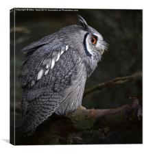 White Faced Scops Owl , Canvas Print