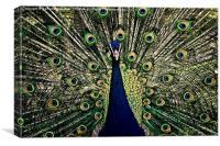 the Peacock, Canvas Print