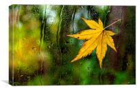 Fallen Leaf on Window, Canvas Print