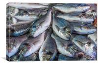 Fresh Fish, Canvas Print