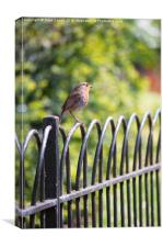 Robin on a Park Fence, Canvas Print