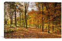 Autumn at Spring Wood, Canvas Print