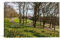 Daffodils in the park, Canvas Print
