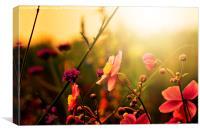 summer wildflowers , Canvas Print