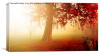 the beautiful red Autumn Tree , Canvas Print