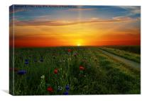 Sunrise over  the meadow , Canvas Print