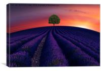 The little green tree on lavender hill , Canvas Print
