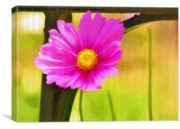 Single Pink Cosmos Flower , Canvas Print