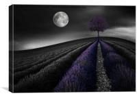 Lavender Hill, Canvas Print