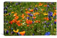 Wild Flower Meadow, Canvas Print