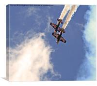 Red Bull Matadors, Canvas Print