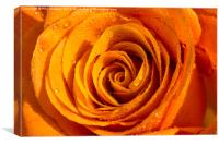 Orange Rose Abstract, Canvas Print