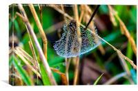 Dew on Web, Canvas Print