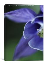 Flower Macro Shot, Canvas Print