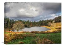 Tarn Hows, Lakeland., Canvas Print