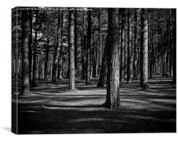 Tentsmuir Trees, Canvas Print