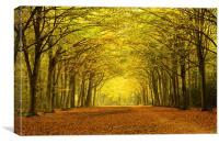 Autumn Arches, Canvas Print