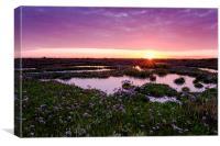 Sea Lavender Sunrise, Canvas Print