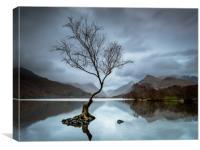 Llanberis Lone Tree (Grey), Canvas Print