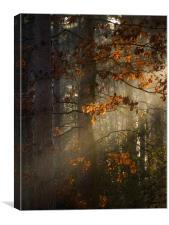 Leaf Ray, Canvas Print