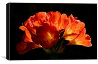 Beautifull flower back light , Canvas Print