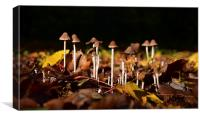 Mushrooms on the forest floor bathed in sun light, Canvas Print