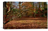 Autumnal scene with Maples, Canvas Print