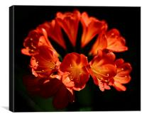 Red flowers high contrast black background , Canvas Print
