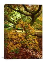 Maple tree during Autumn , Canvas Print